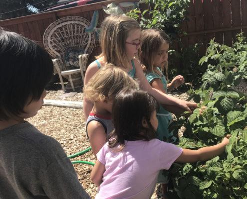 preschool children picking berries